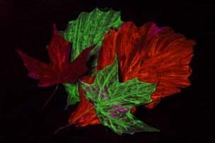 Leaves & Fluorescent Paint
