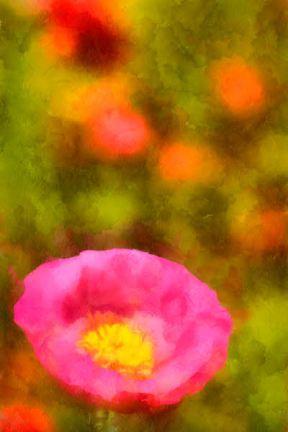 00820_DSC1454_nx_resize_DAP_Watercolorblog