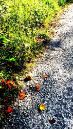 Unknown_150729_120358_IMG_1273-1