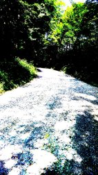 Unknown_150729_120524_IMG_1290-1