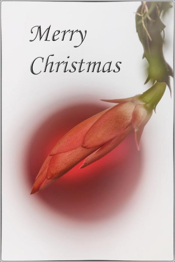 christmas_D800E_151221_091058__DSC5723-2