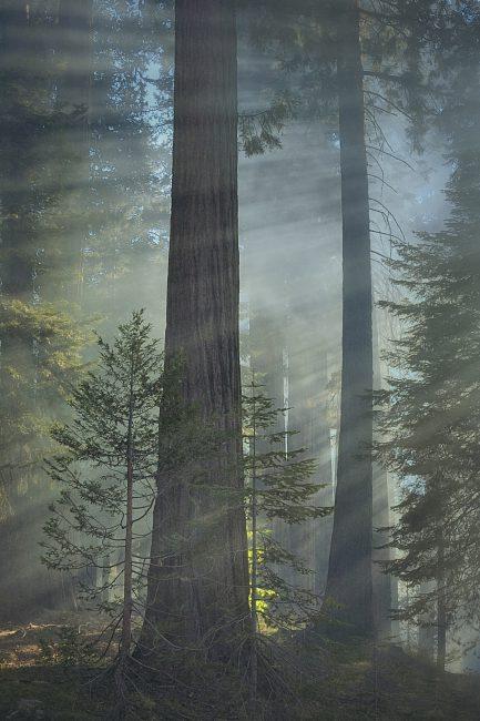 {Q-P}_DSC1461_nx v1 cep + fog2 copy